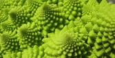 pasta e broccoli © foto Daniela di Veroli